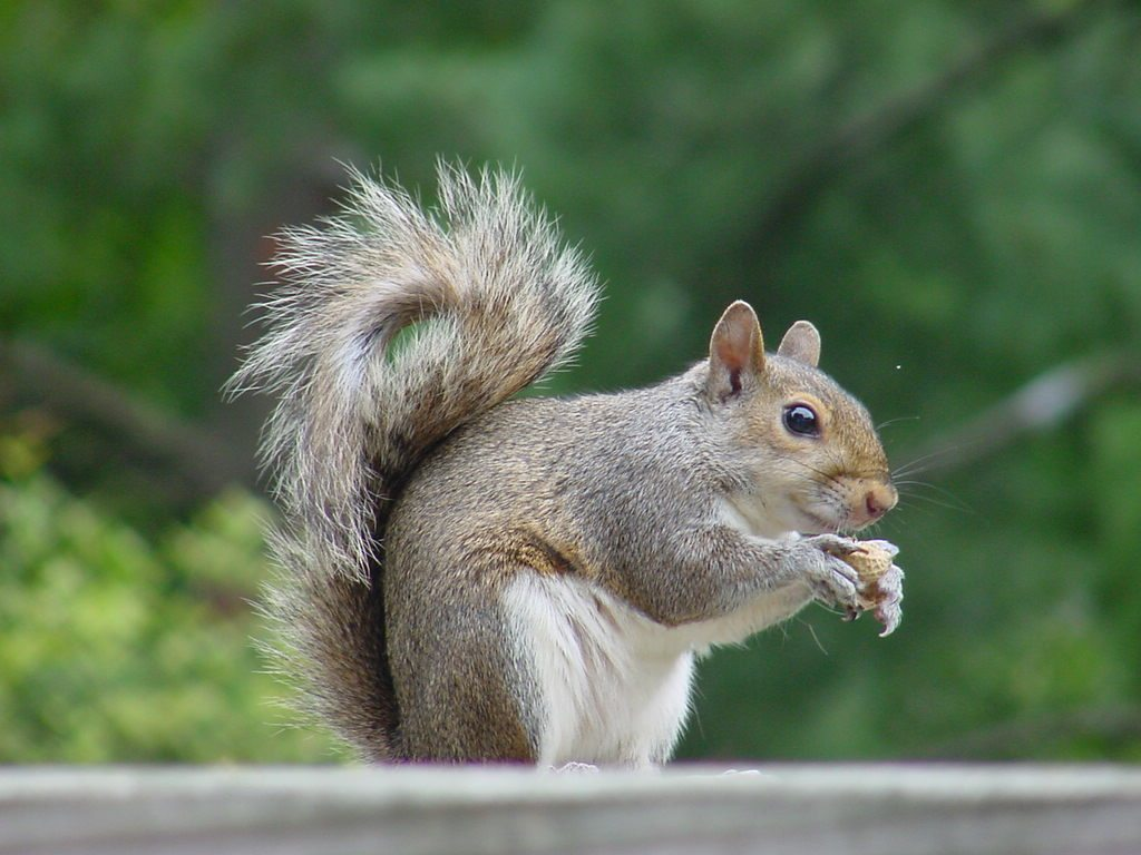 Career Transitions! Grass is Greener! SQUIRREL!