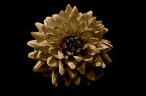 Flower Isolation