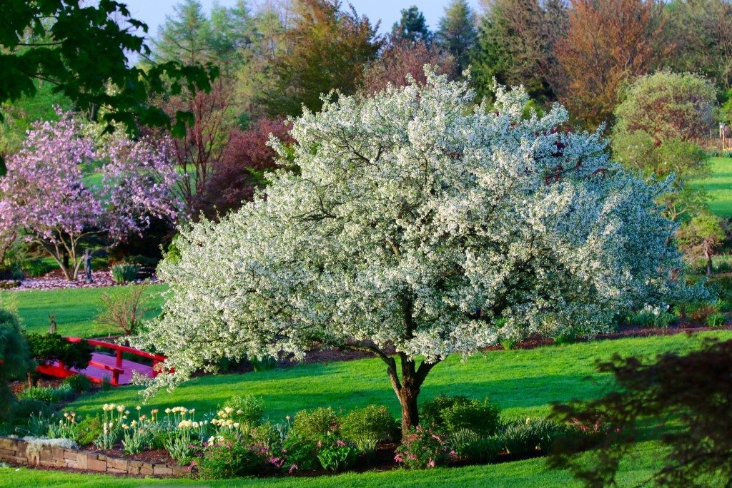 Credit to- Sycamore Hill Gardens