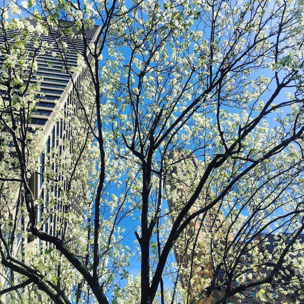 Park Ave. Flora