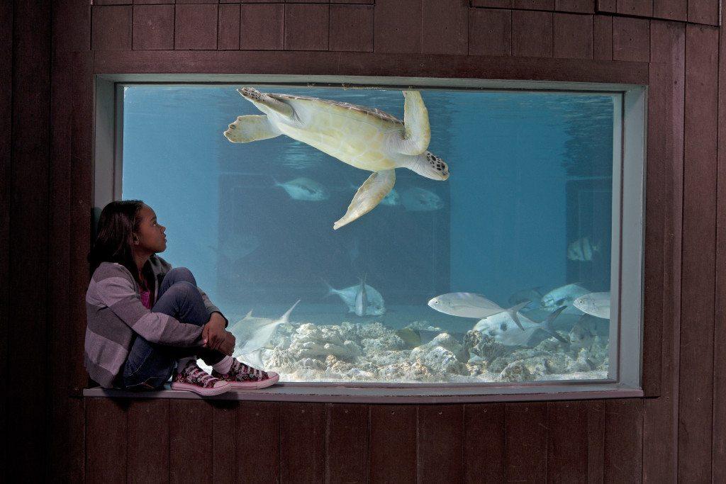 Credit to: The Maritime Aquarium