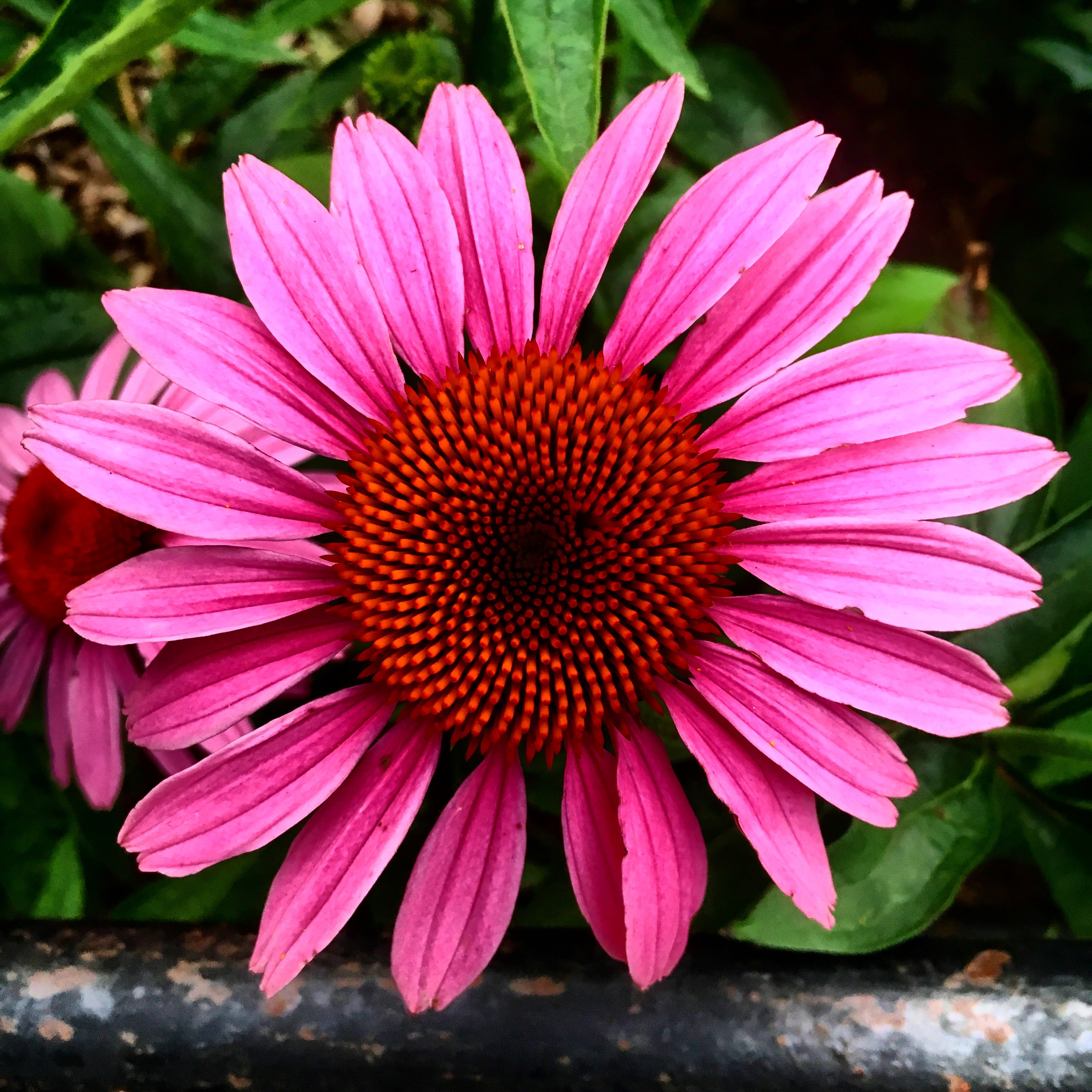 Central Park Flower